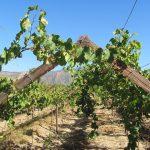 Wijn bij Avocado – Ook een avocado verdient een goede wijn!
