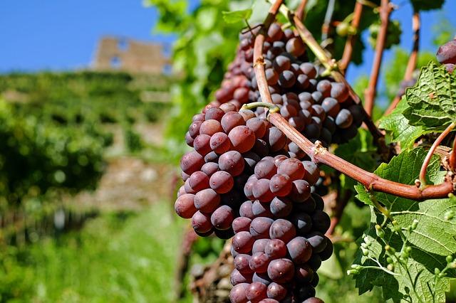 lindemans wijn