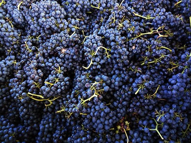 shiraz-wijn