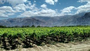 wijnstreek Cafayates
