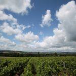 Argento wijnen – Ontdek alles over de prachtige Argento wijn