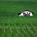 Wijn Bij Noten – Is Het Eten Van Noten Een Goede Combinatie met Wijn?