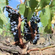 toscane wijn