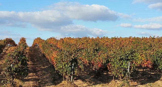Faustino wijn
