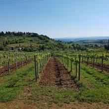 Asti-Wijn