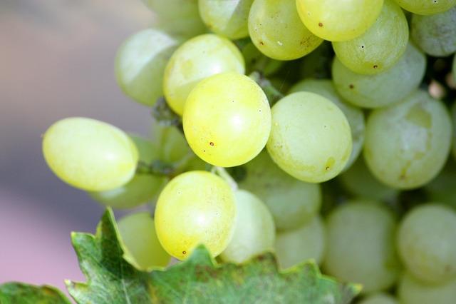 Hardys-wijn