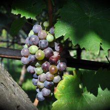 Pomerol-Wijn