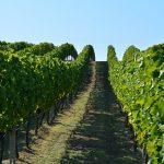 Salentein Wijn: Bekend Maakt Bemind